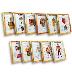 Human Anatomy (Set Of 11)