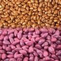 Seed Coating Polymer