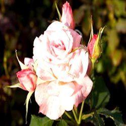 цветы, экзотические растения опт москва.