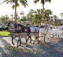 Elegence White Victoria Carriage