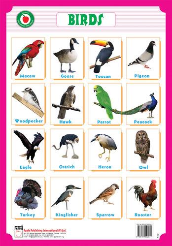 10 birds names in hindi Yatayat ke sadhan in hindi cbse class 10 hindi cbse class 3 hindi cbse class 4 hindi cbse class 5 hindi cbse class 6 hindi cbse class 7 hindi cbse class 8 hindi.