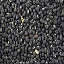 urad black gram