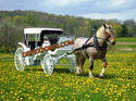 Spring Victoria Horse Carriage