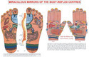 Acupuncture Devices Reflexology Chart
