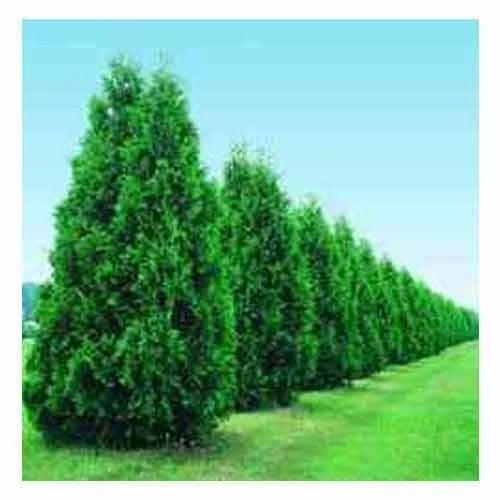 appealing and decor garden trees matt cori gardens decorative small for shrubs
