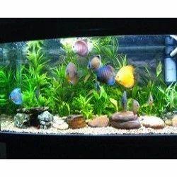 Fish Aquarium Accessories India Best Accent Chairs And