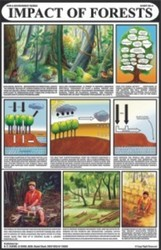 Impact Of Forests for Man & Environment Chart