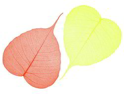 Multicolored Skeleton Leaves For Crafts