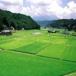 217 agricultural farms