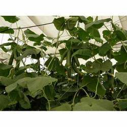 Agro Vegetable Cultivation Net