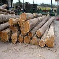 Nagpur Teak Wood Log