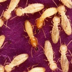 Termite Eliminator Service