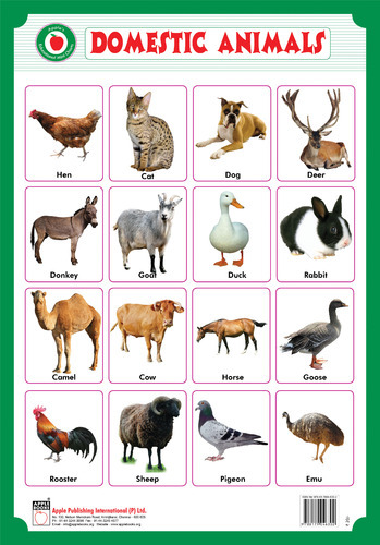 essay on domestic animals for kids Some important domestic animals the cow is the most useful of all the domestic animals the milk of the cow is both a food and a drink bulls are very useful to the .