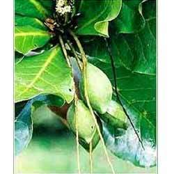 Fruit+Plants