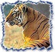 Indian Wildlife Tour 02