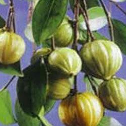 garcinia-cambogia-250x250.jpg