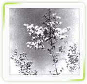Lawsonia Alba Dry Extract ( Henna)