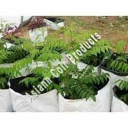 Curry Leaf Grow Bags