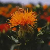 Safflower Extract / Carthamus (Water Soluble)