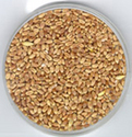 cereals amp food grains