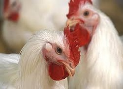 Poultry Range Products
