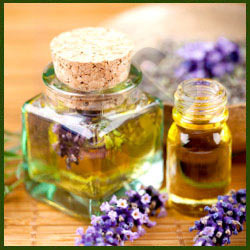 lavender t oil