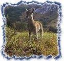 Indian Wildlife Tour 01