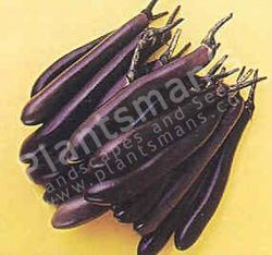 Brinjal (Egg Plant) Purple Long
