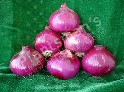 Onion Pmls 53