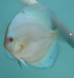 Fishes Breeding Services