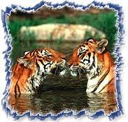 Indian Wildlife Sancturay Tours