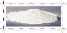 Gum Aracia