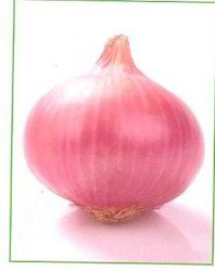 Onion Seeds Lalima