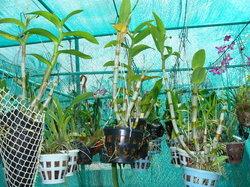 Cochin Orchid Garden View