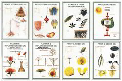 Botany - I (Set of 8)