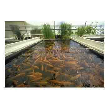 LDPE Plastic Sheets For Fish Breeding Films / Fish Farming Pond