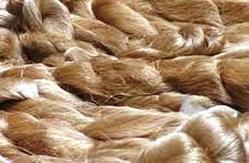 Muga Silk Yarns In Various Counts