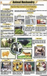 Animal Husbandry For General Chart