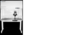 Laminar Flow Table for IVF