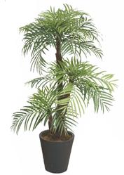 pearl palm