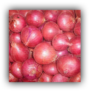 Onion IB http://www.indiamart.com/aarambh-india/products.html