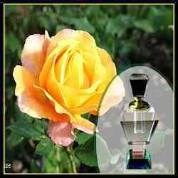 Rose Gul Fragrance 1