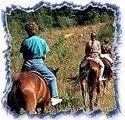 Horse Safari Tour 01