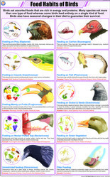 Food Habits Of Birds For Zoology Chart