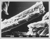 Powdered Cellulose