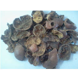 Punica Granatum Brown