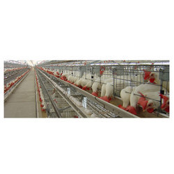 broiler breeder layer cages