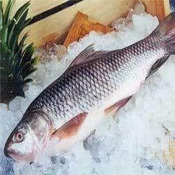 Frozen Fresh Water Fishes
