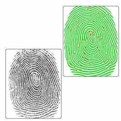 Fingerprint Identification Services