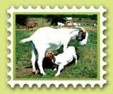 Gottery Farming